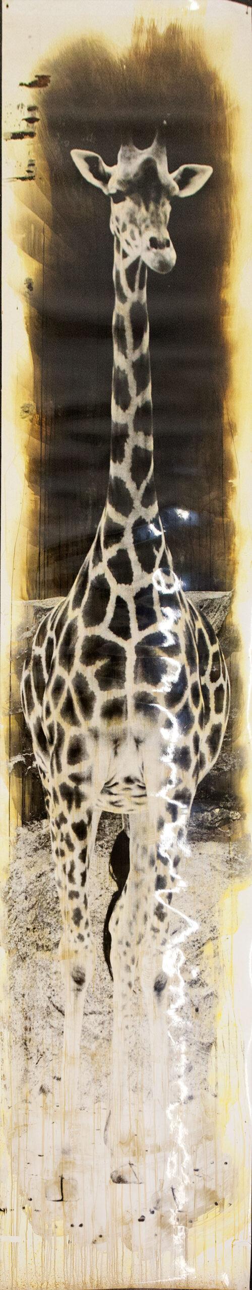 Giraffe.2.b