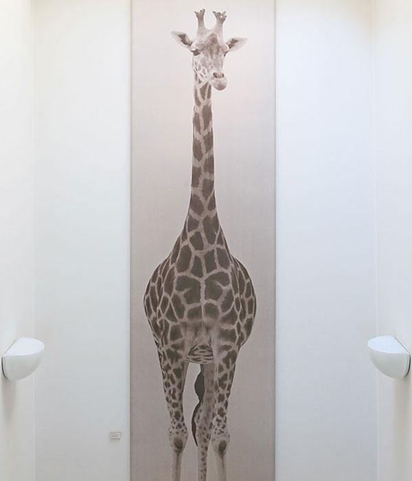 3 legged Giraffe