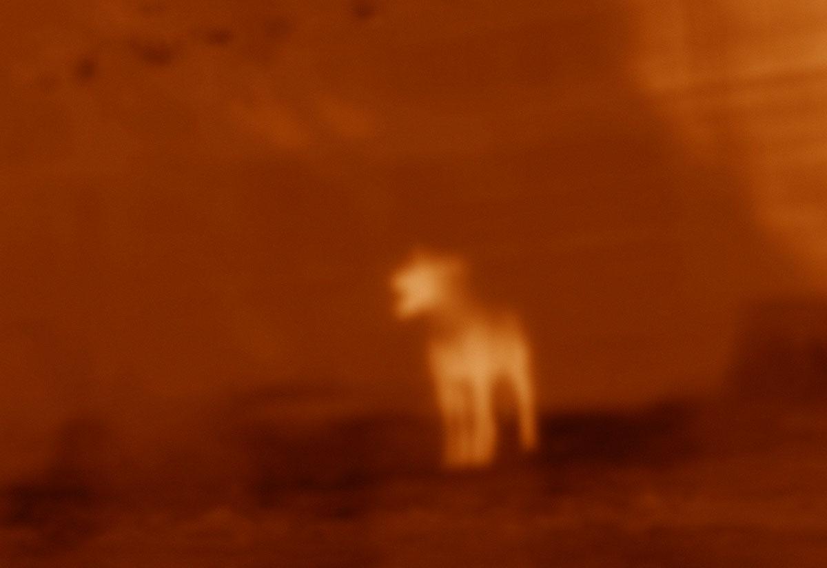 wolvespack