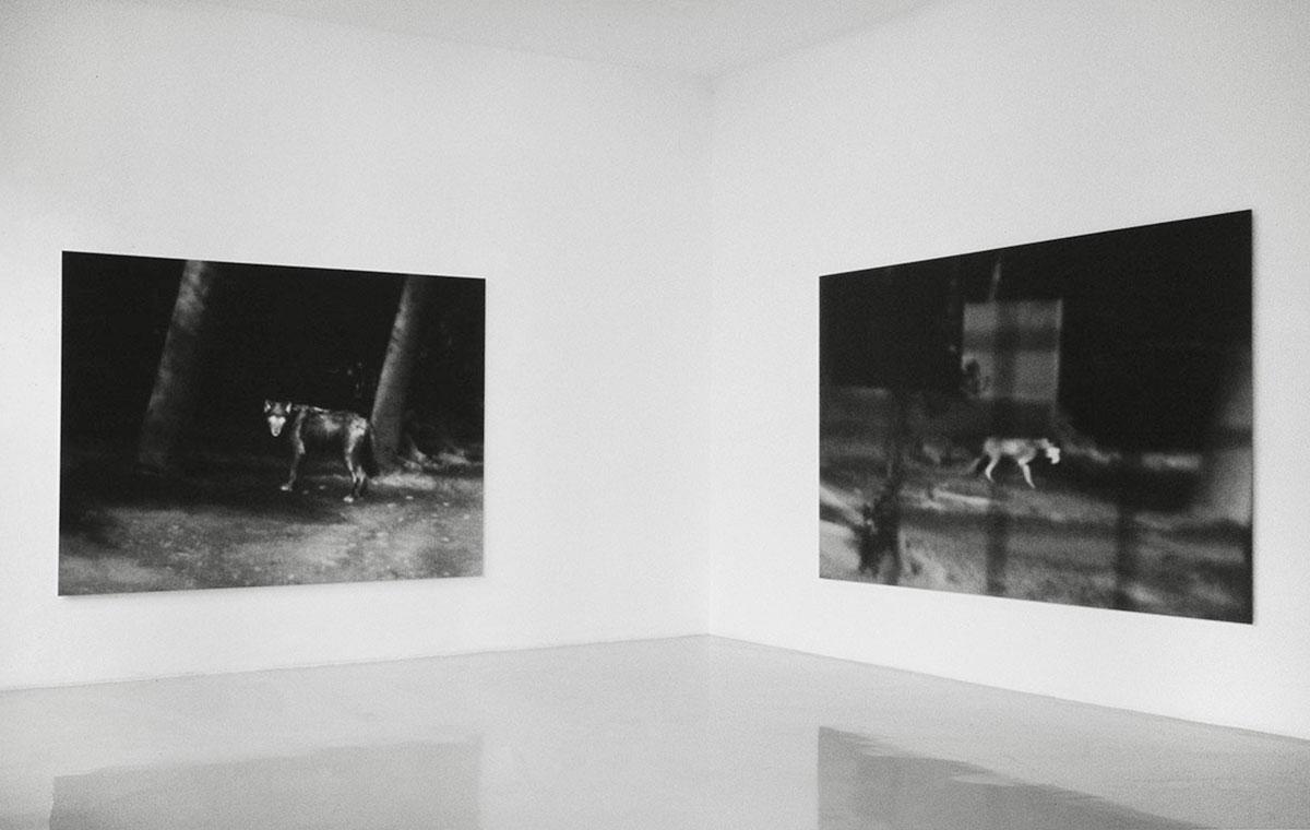 Wolves, Galerie Feichtner, Vienna